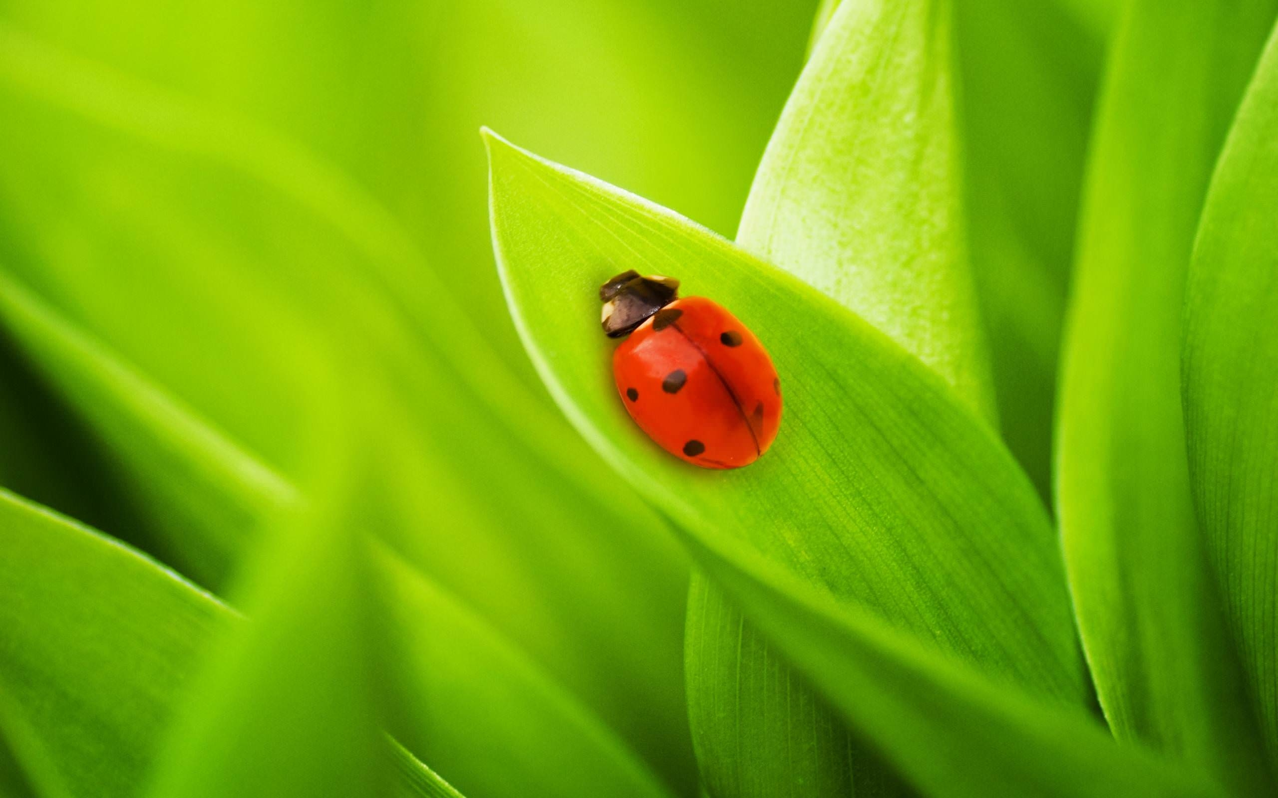21 Lady Bug Wallpapers Backgrounds Images