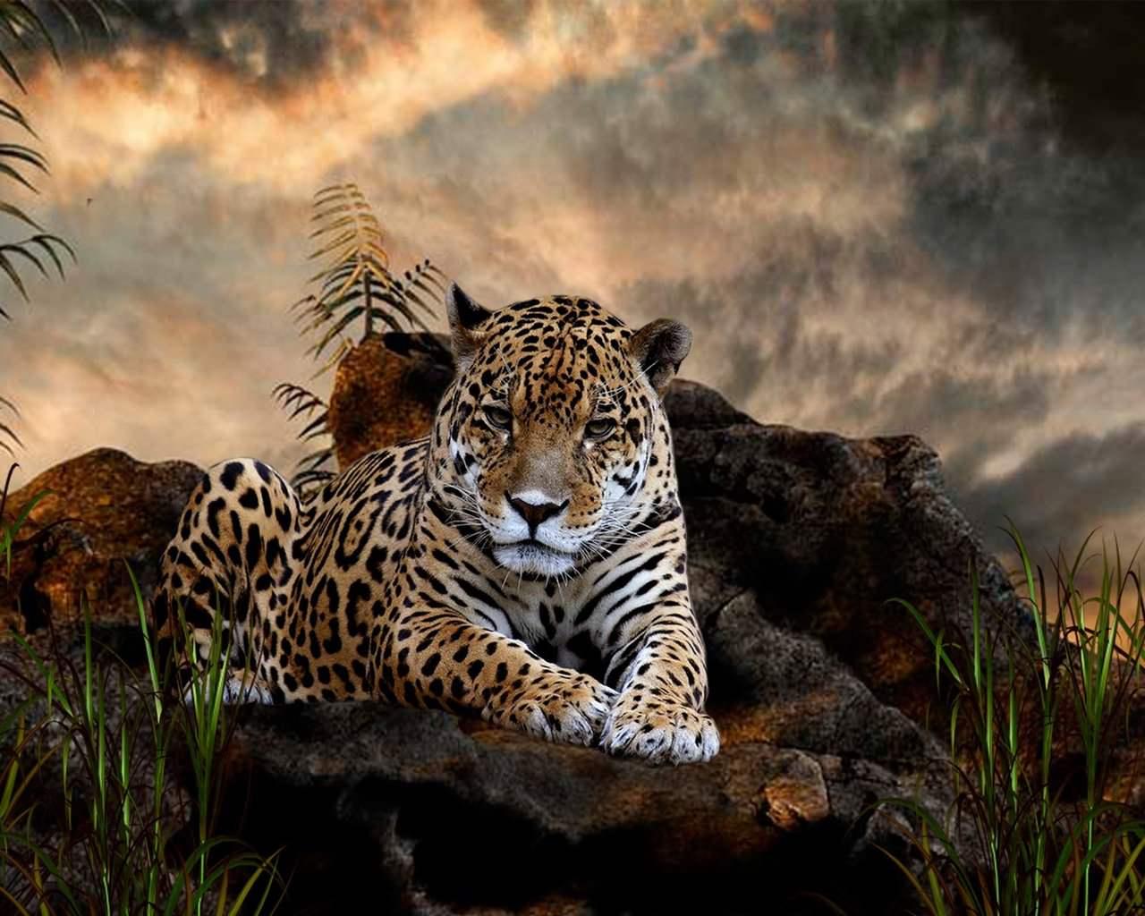 Majestic Leopard Wallpaper