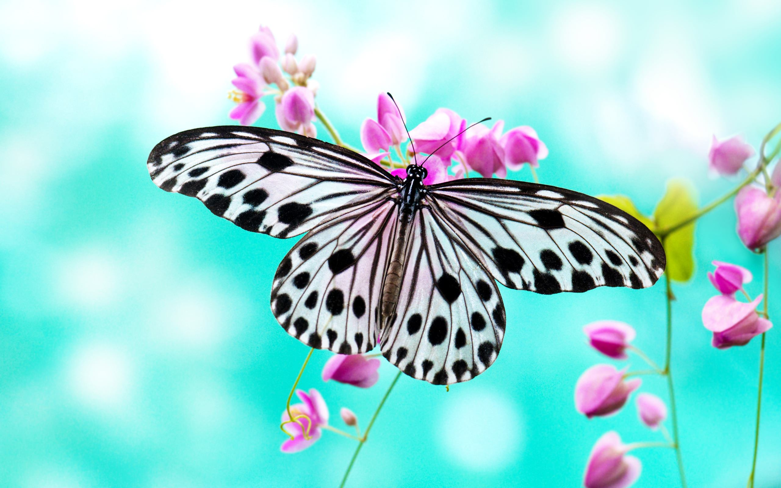 Marvellous Butterfly Wallpaper