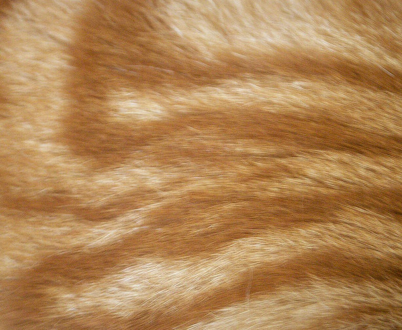 Mysterious Cat Fur Texture