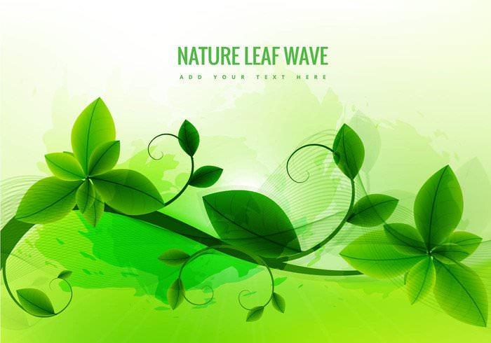 nature leaf green background