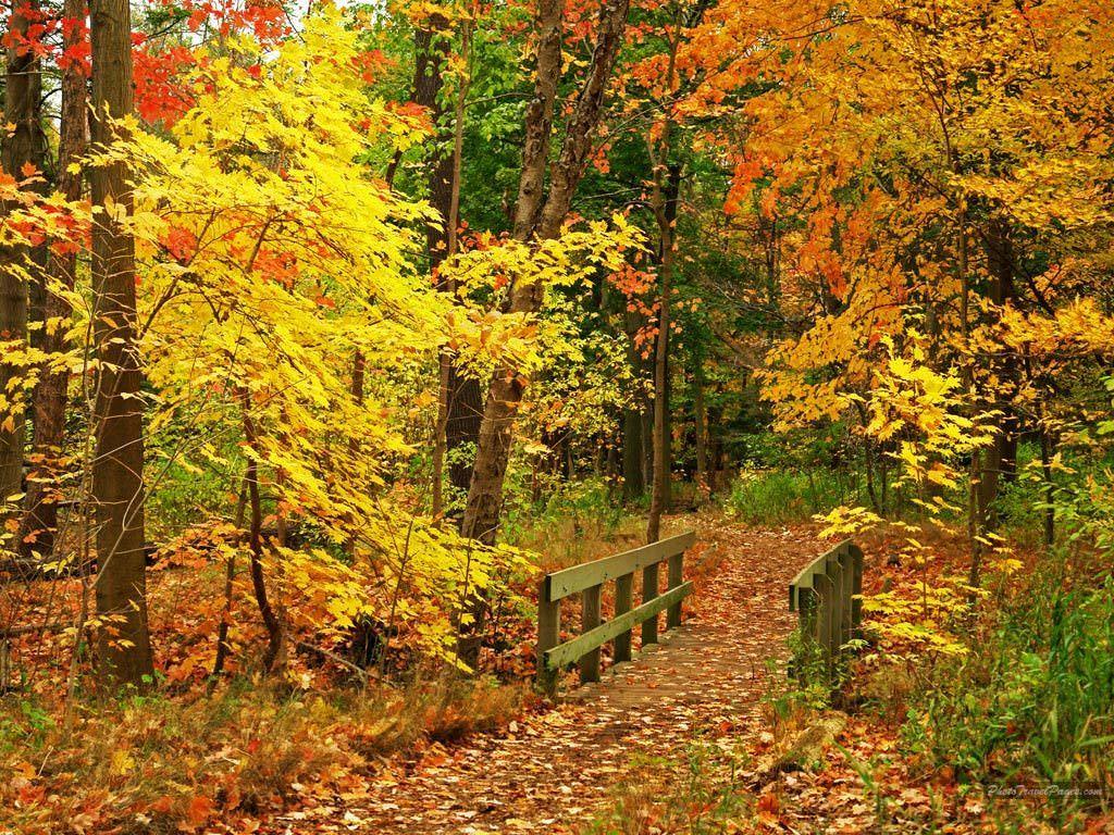 Nice Fall Wallpaper
