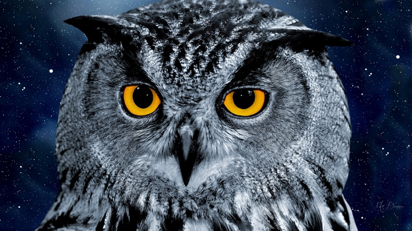 Night Owl Wallpaper