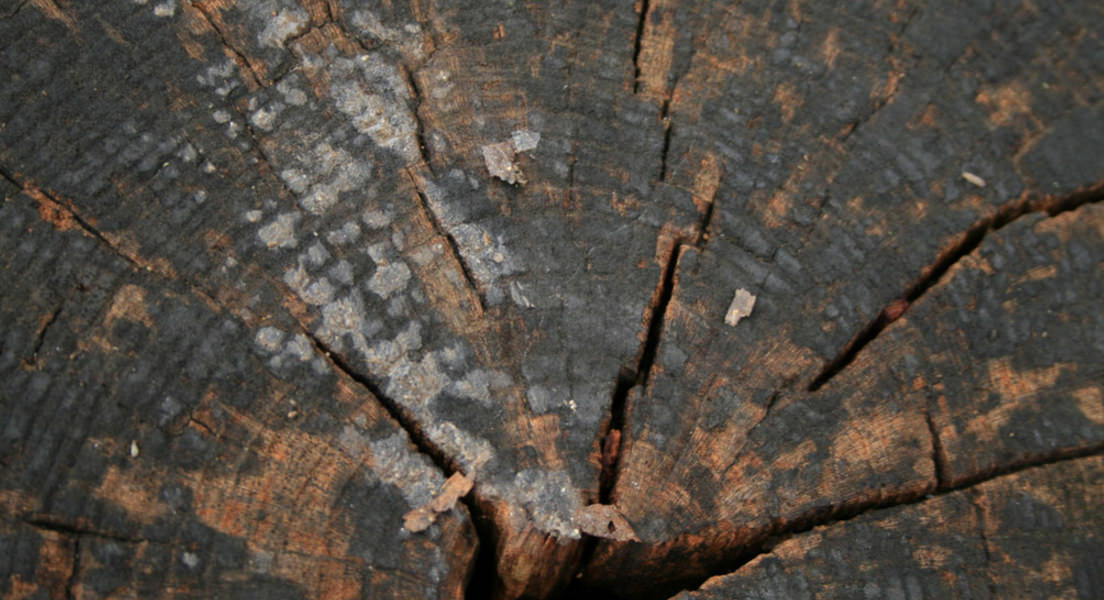 Old Tree Rings Texture