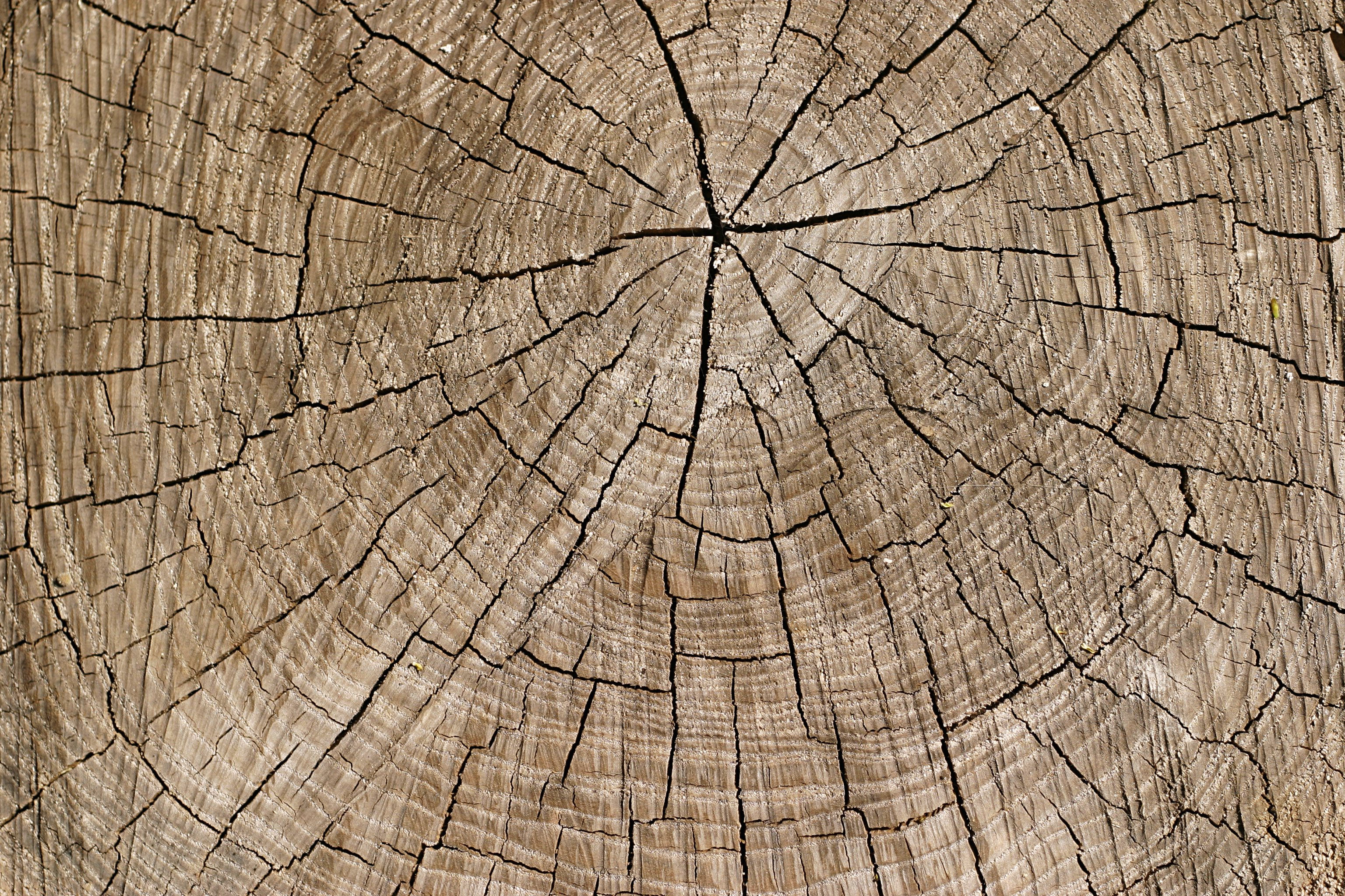 Old Wood Tree Ring Texture