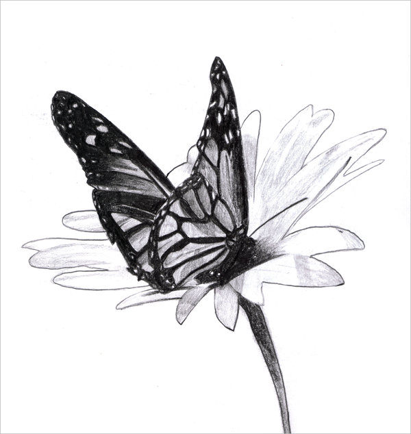 Outstanding Butterfly Drawing