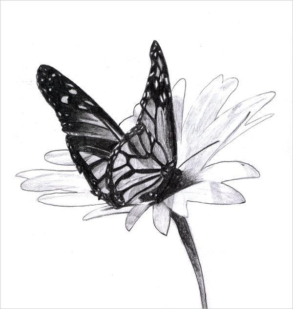 13+ Butterfly Drawings - JPG Download
