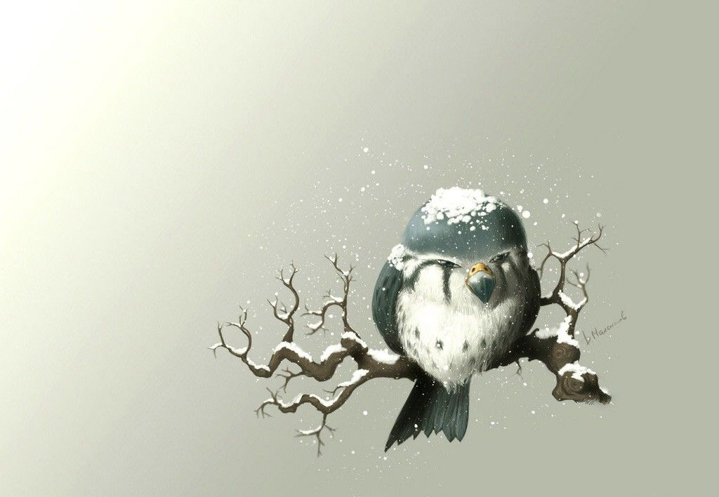 Owl Wallpaper For Free Download