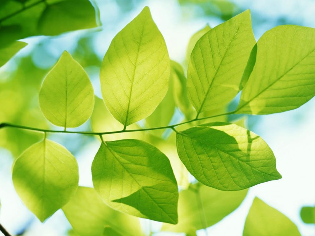PlantLeaves Background