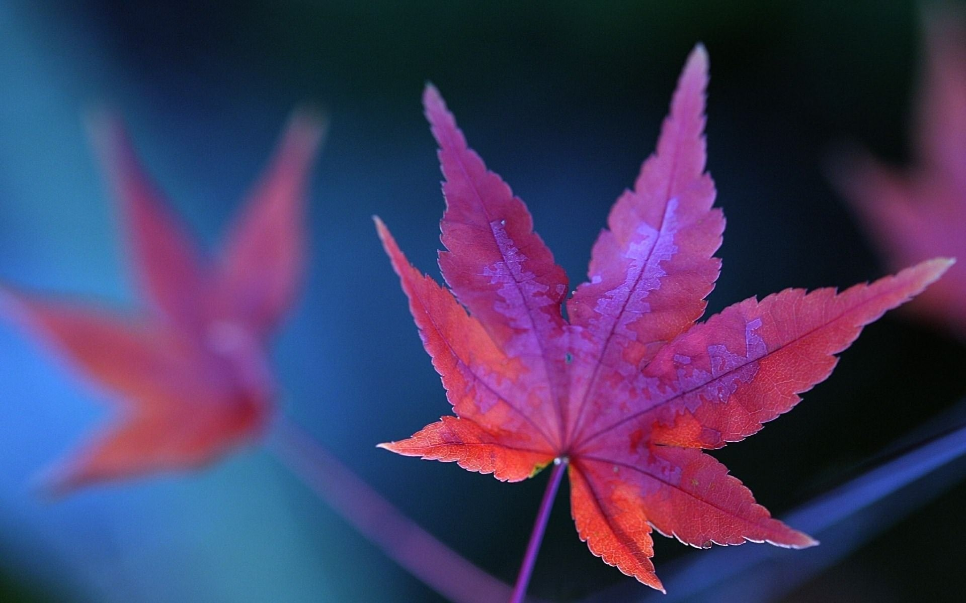 Purple Leaf Background
