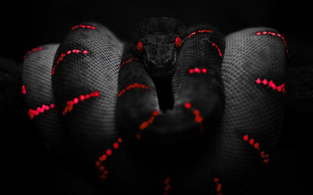 Red & Black Snake Wallpaper