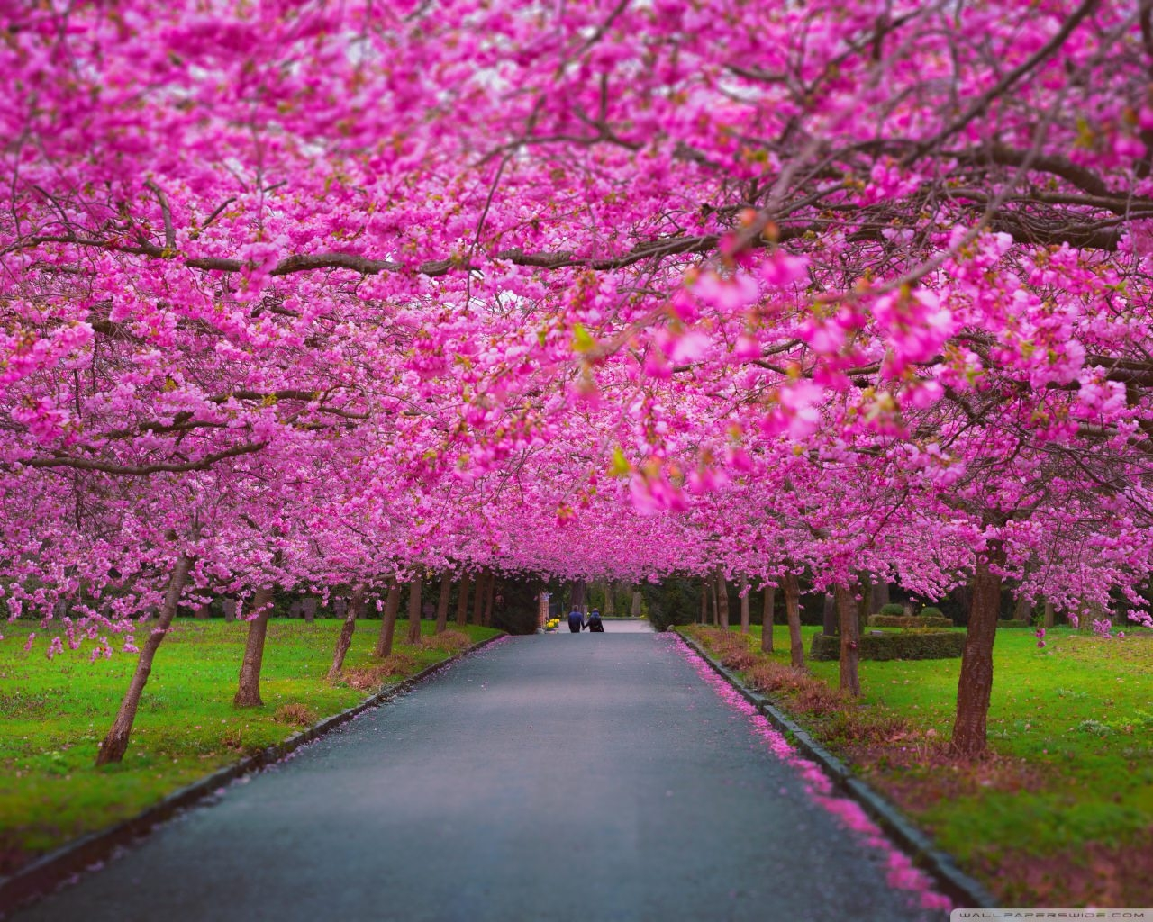 Romantic Spring High Quality Background