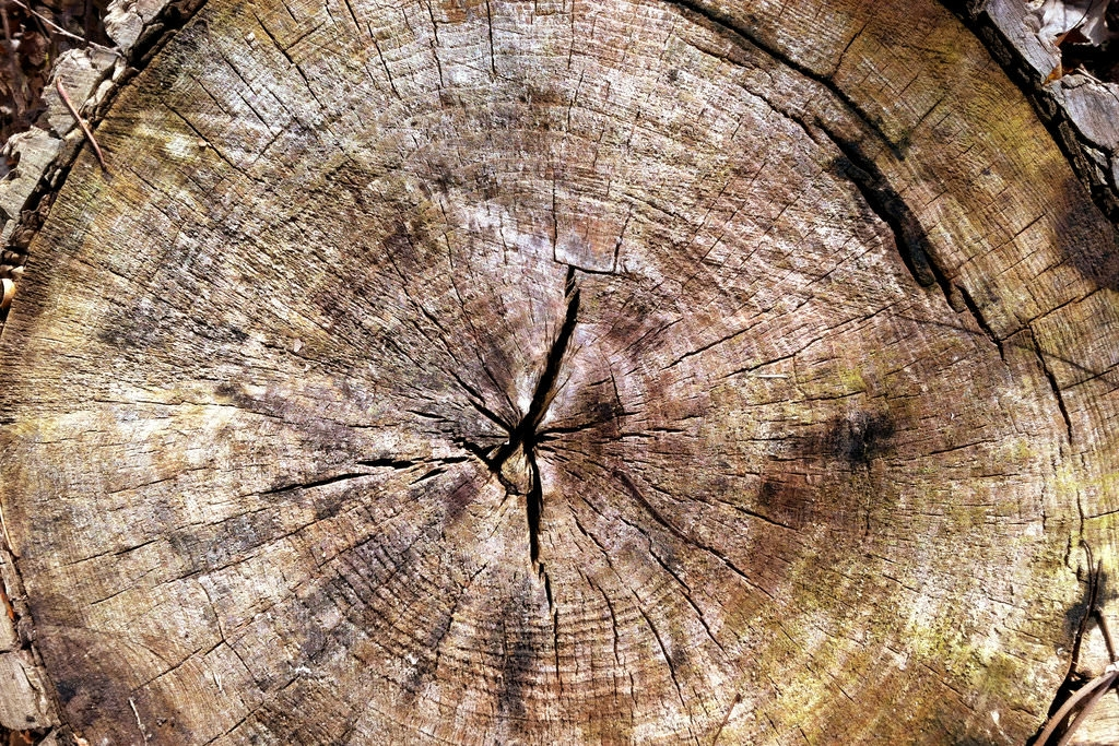 Simple Tree Rings Texture
