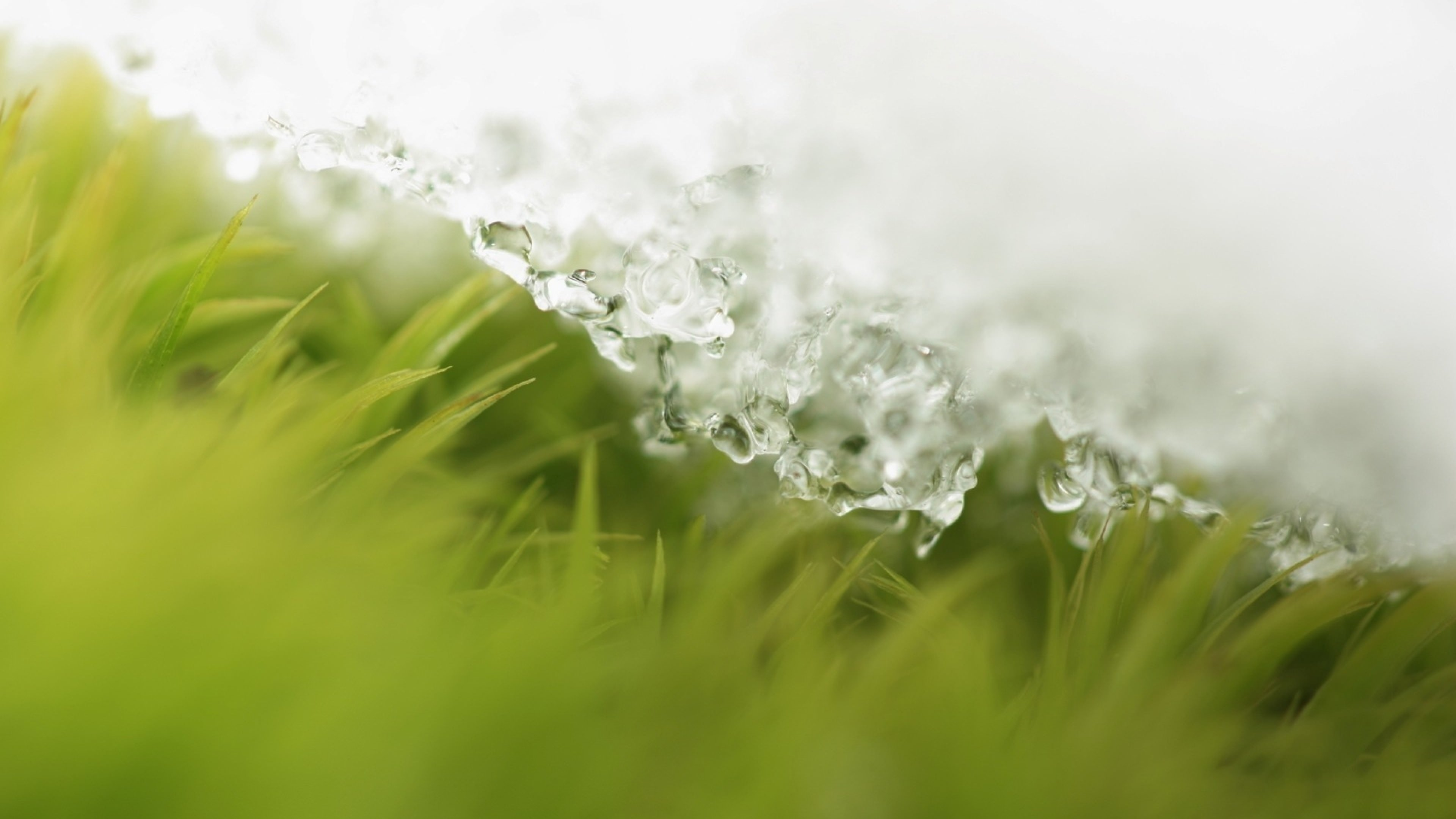 Snow Grass Layer Ice Background