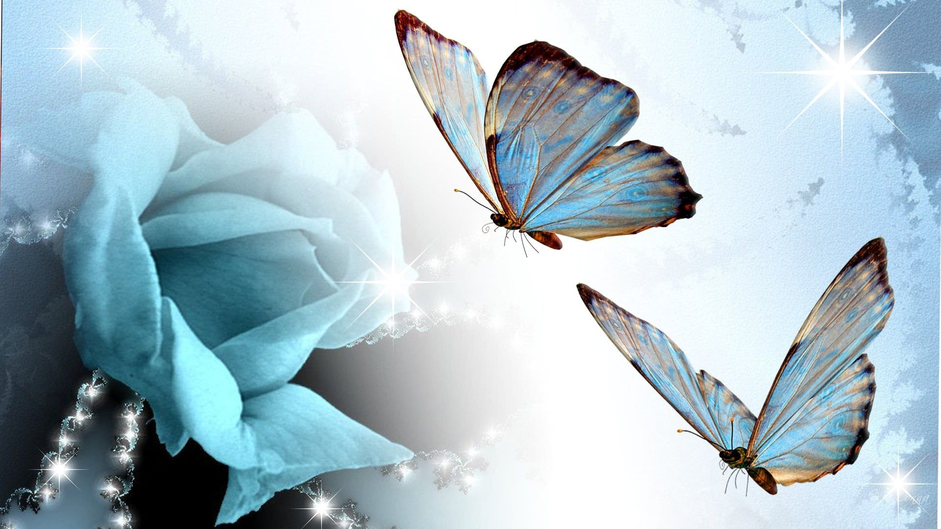 Stunning Butterfly Wallpaper