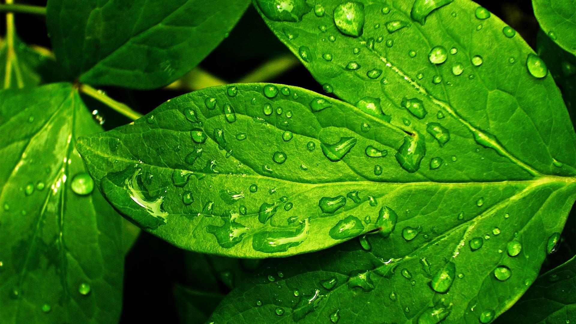 stunning green nature background