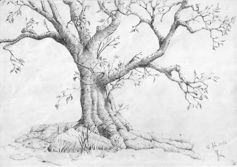 Stunning Tree Drawing