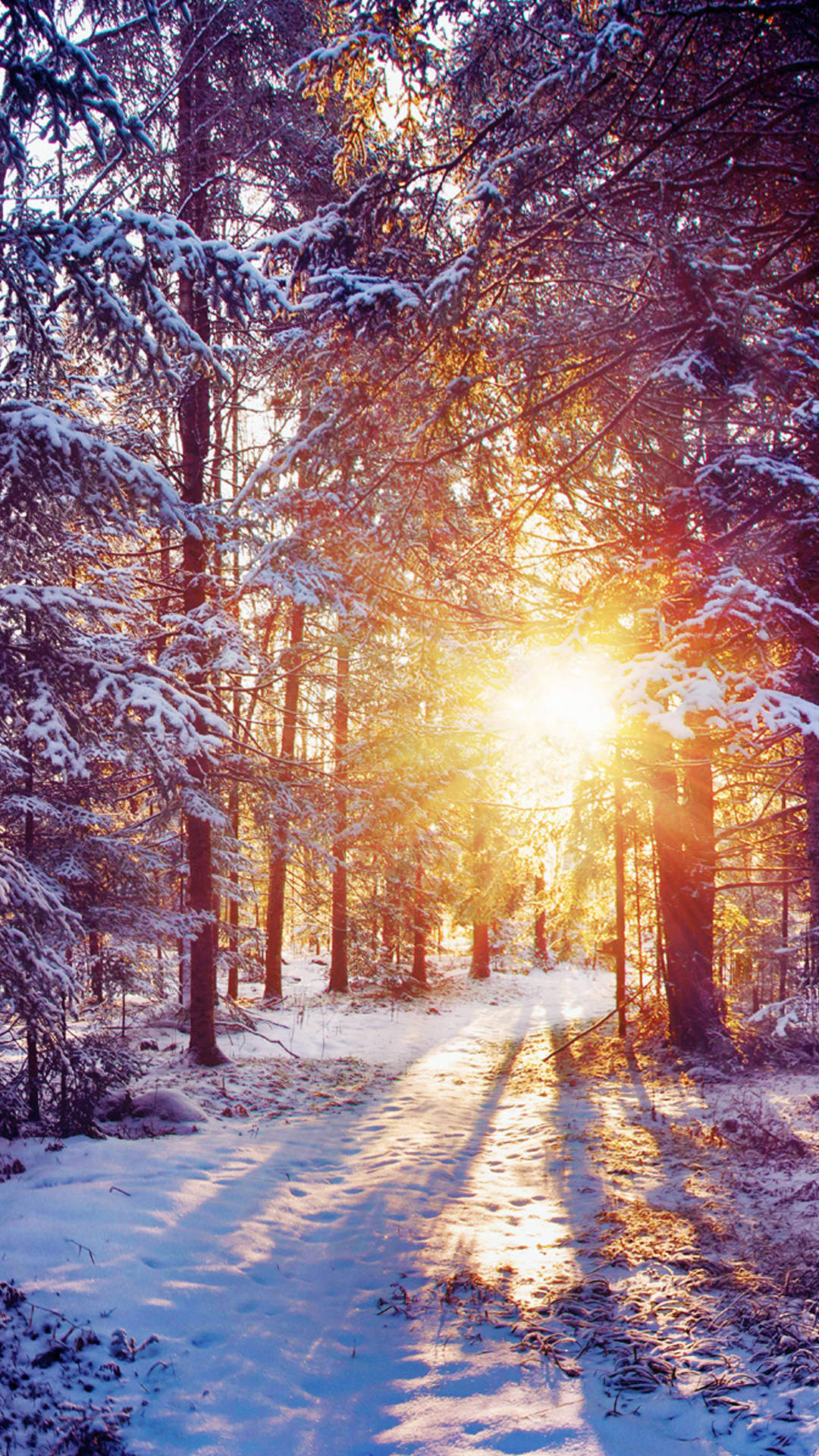 Sun Rays Winter Forest Wallpaper