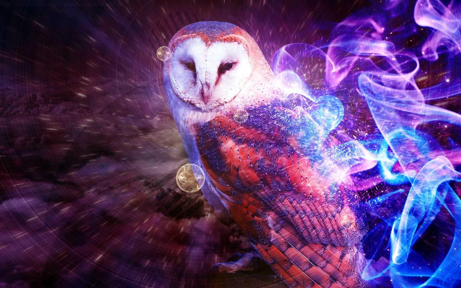 Terrific Owl Wallpaper
