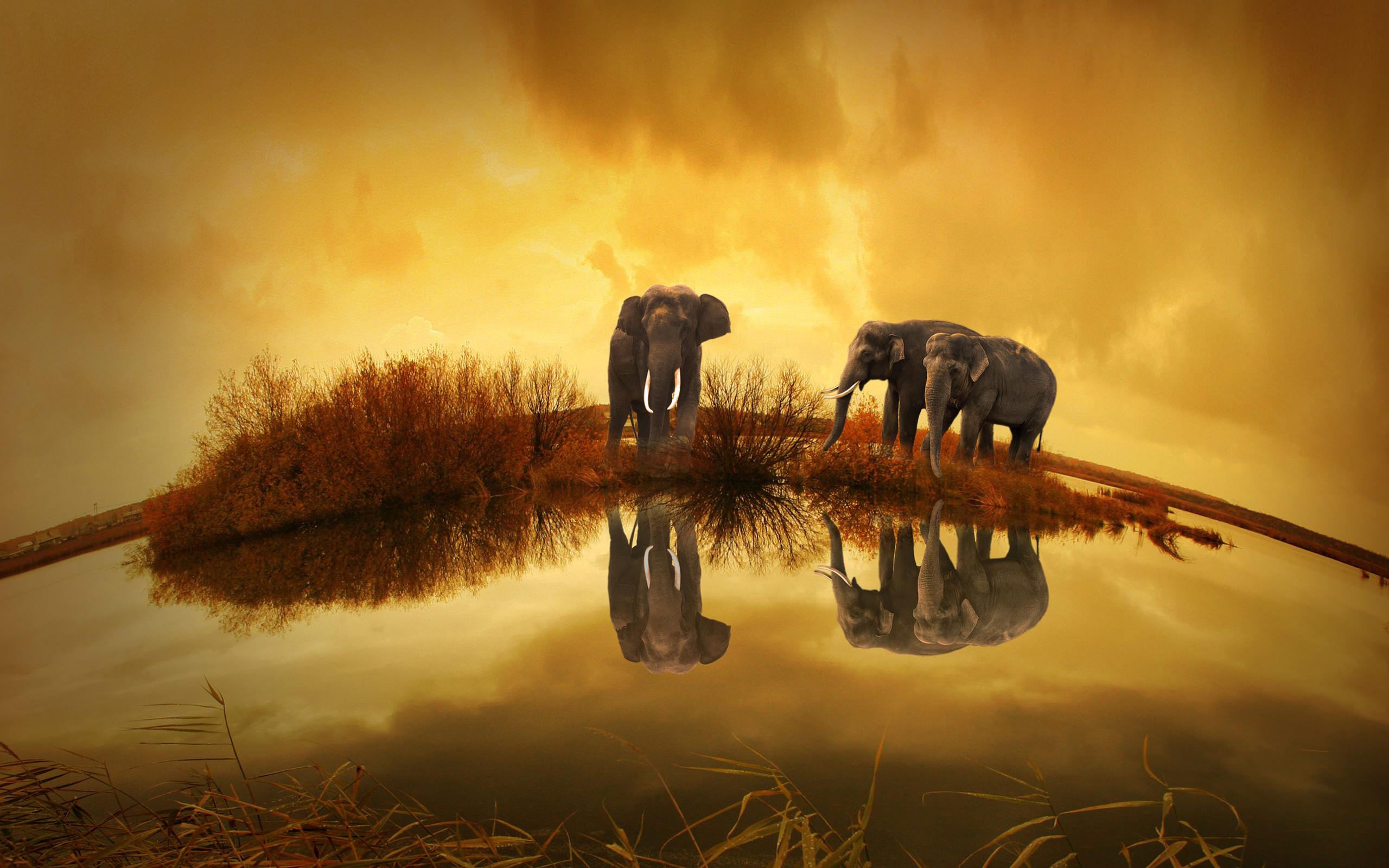 Thailand Elephants Wallpaper