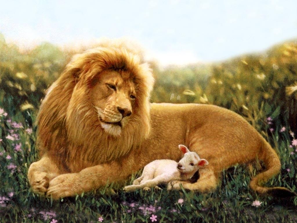 The Lion & a Lamb Wallpaper