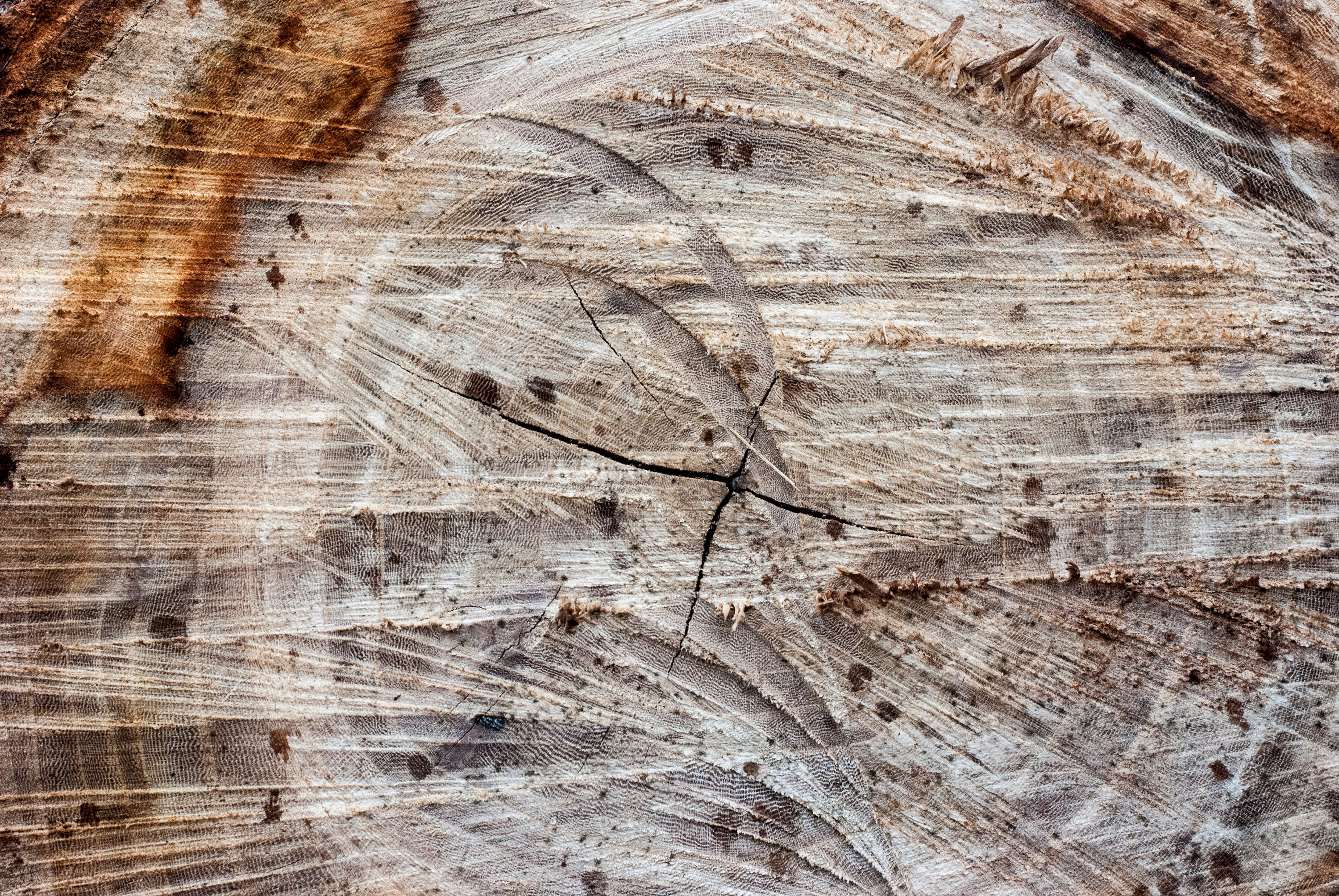 Tree Ring Textures For Free