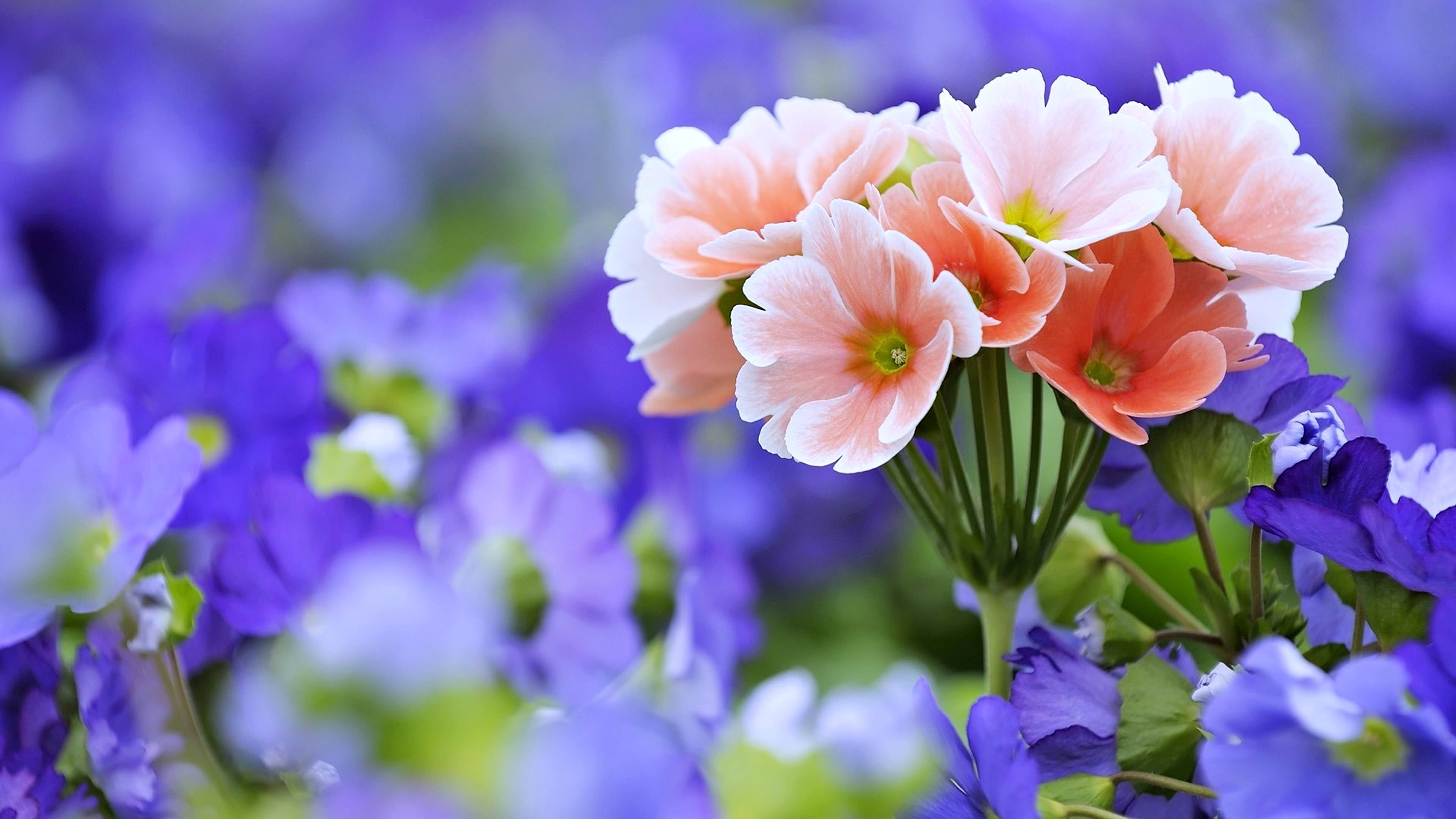 Ultra HD Flower Bouquet Wallpaper