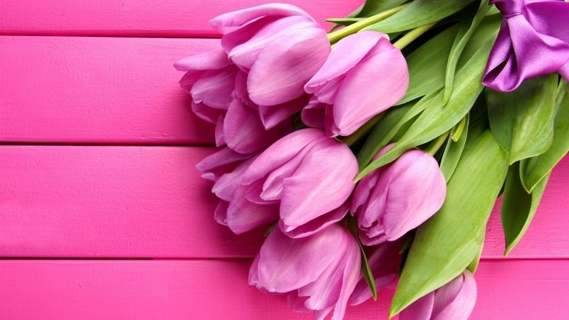 Ultra HD Pink Tulips Wallpaper