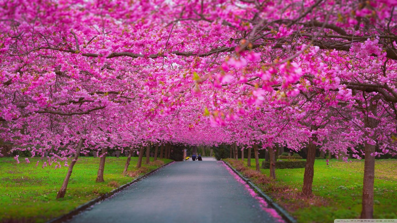 Ultra HD Romantic Spring Wallpaper