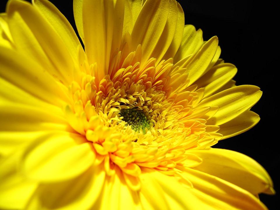 Yellow Flower Petals Wallpaper