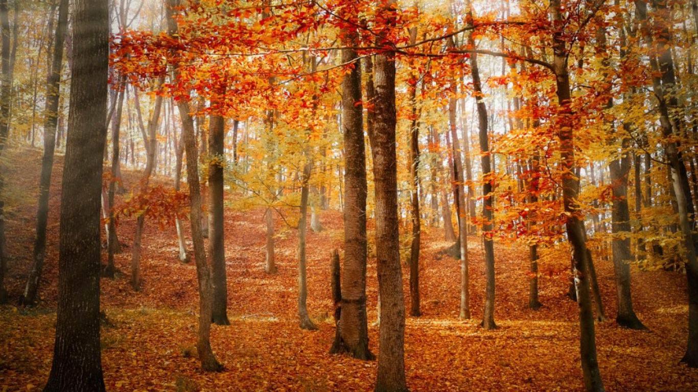 fantastic Fall Wallpaper