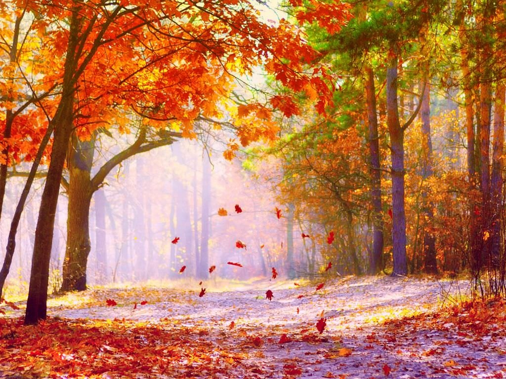 fascinating fall wallpaper