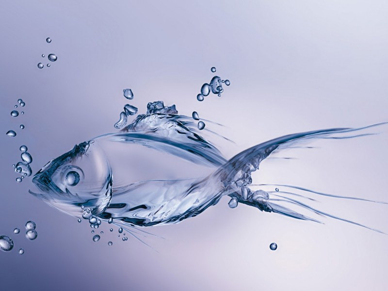 3D Transparent Fish Wallpaper
