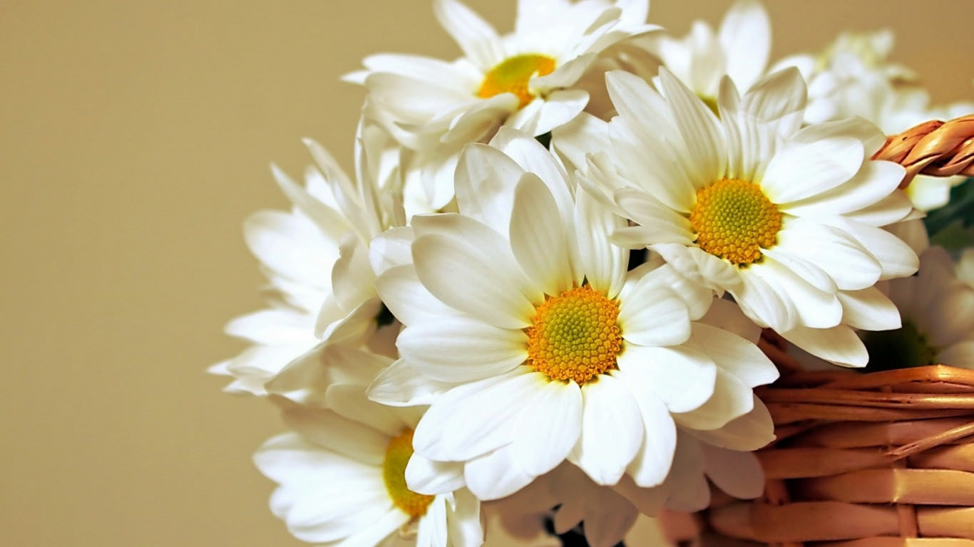 Abstract Daisy Flower Wallpapers