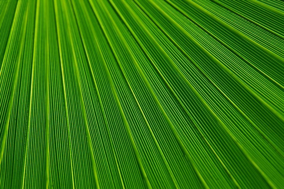 Abstract Green Textured Background