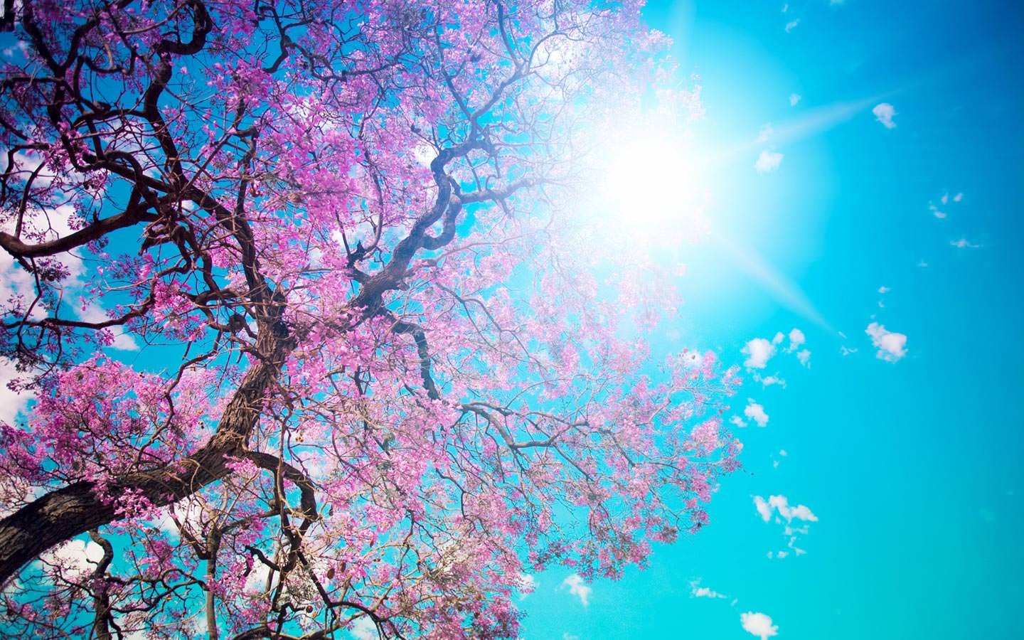 Amazing Spring Nature Wallpaper