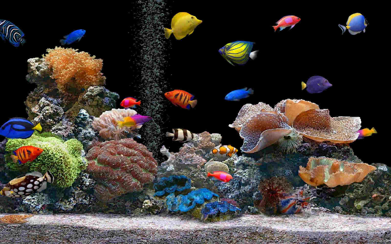 Aquarium HD Wallpaper For You