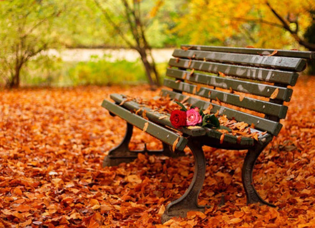 Autumn Bench Background