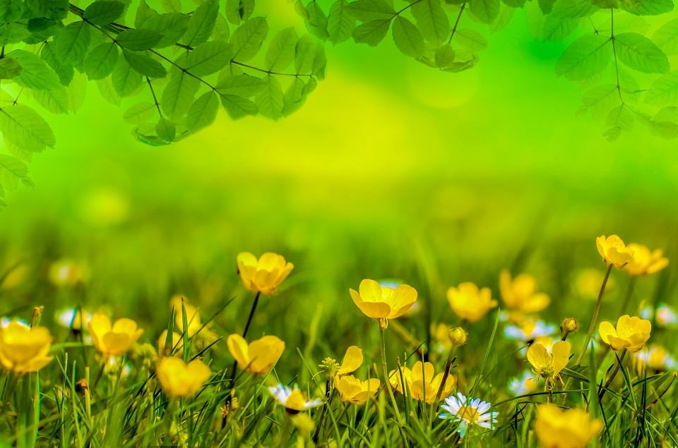 Awesome Spring Flowers Wallpaper