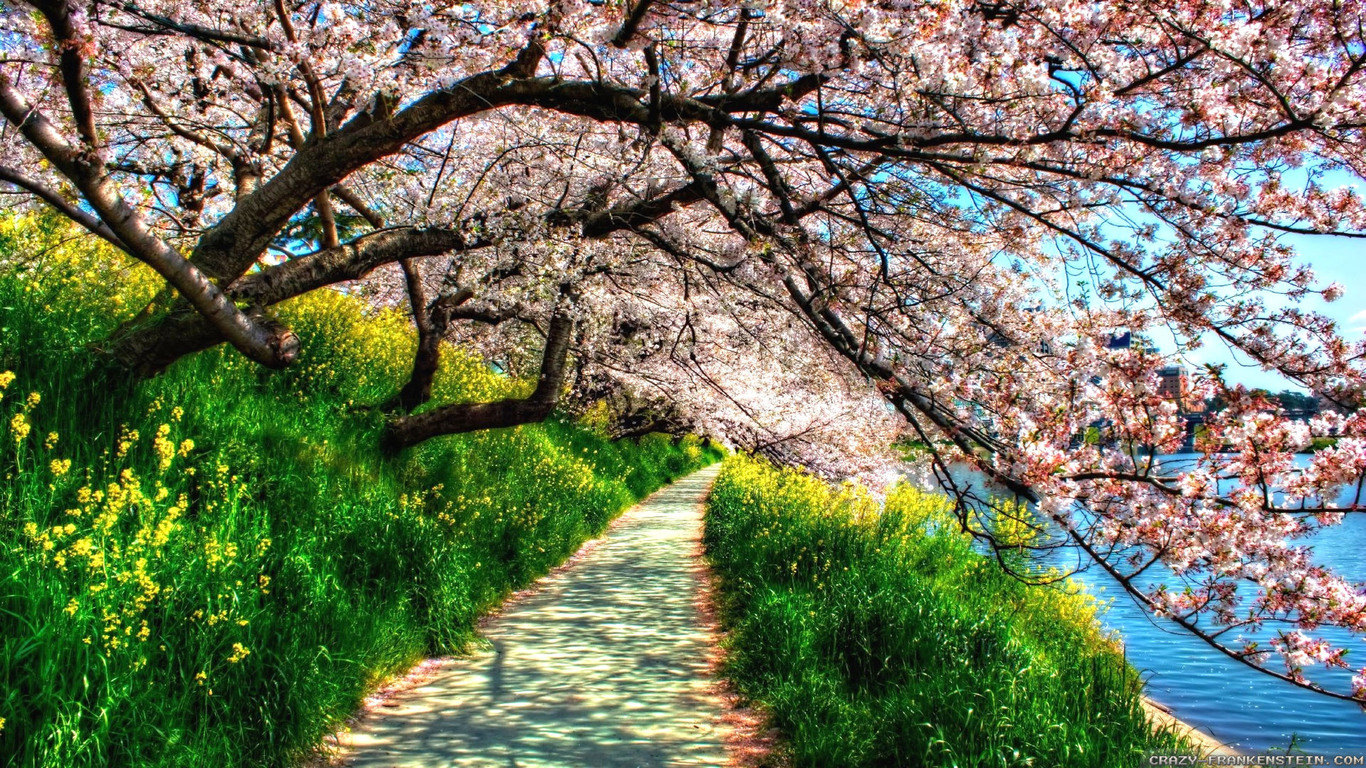 22+ Spring Nature Wallpapers, Backgrounds, Images