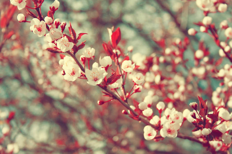 Awesome Spring Photography