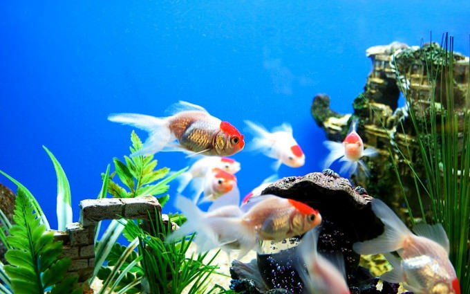 Beautiful Aquarium Wallpaper
