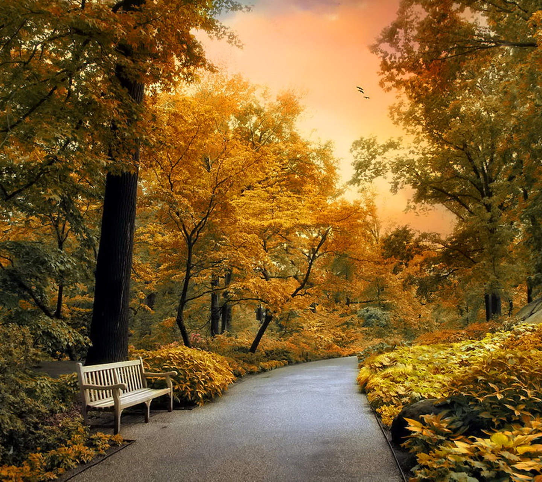 Bench Garden Wallpaper