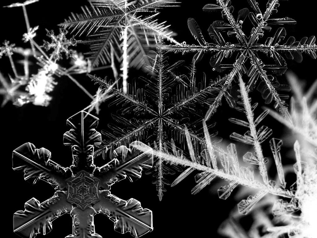 Black & White Snowflakes Wallpaper