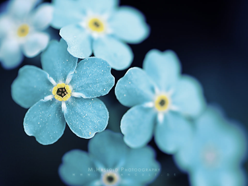 21 spring flower wallpapers flower backgrounds images pictures blue spring flowers wallpaper mightylinksfo