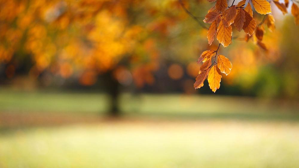 Blurred Autumn Wallpaper