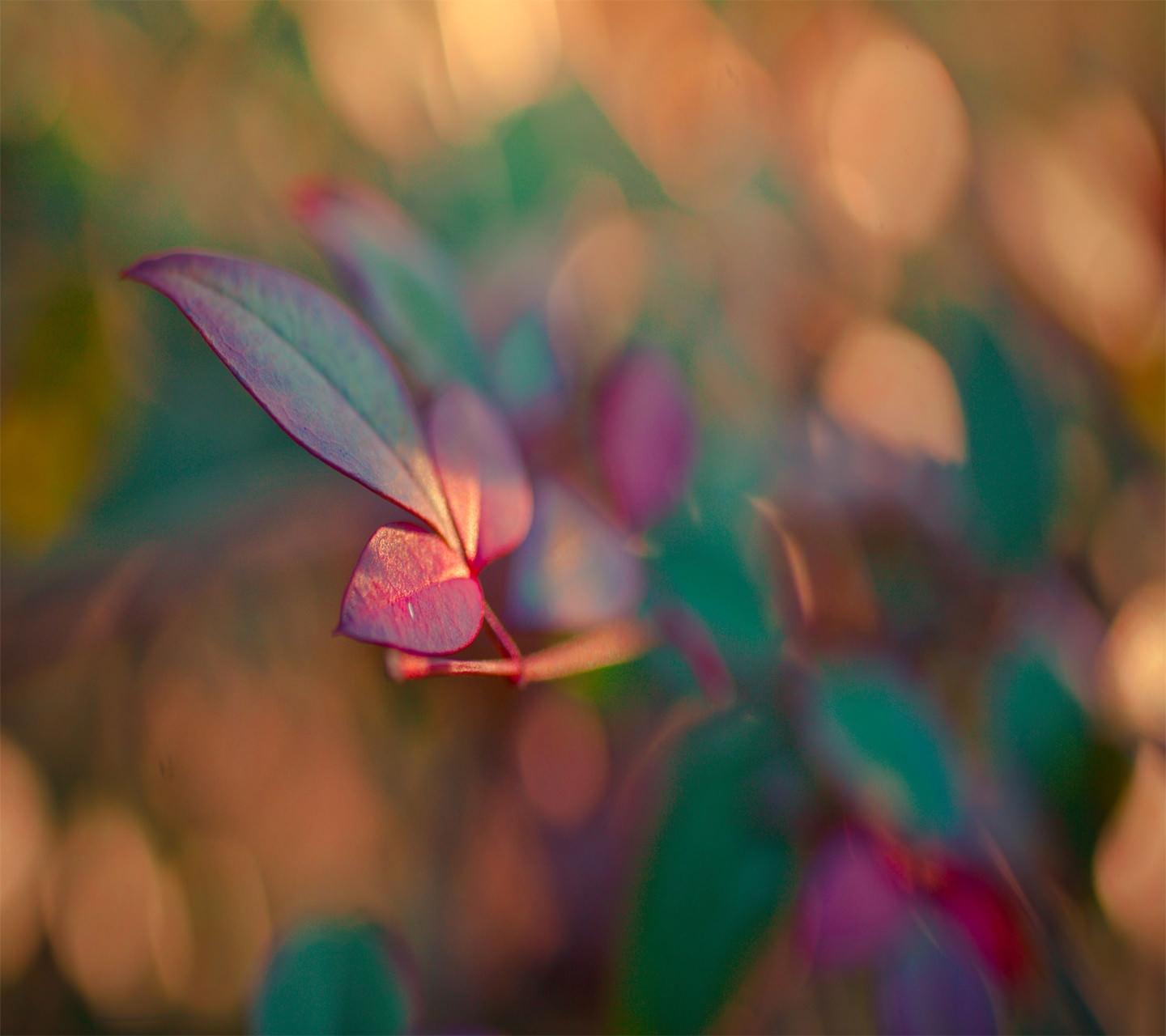 Blurred Colorful Flower Wallpaper