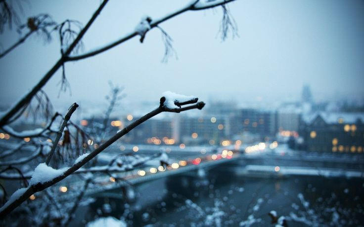 Blurred Snow Branches Wallpaper