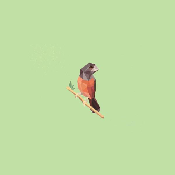 Branding Poly Bird Logo