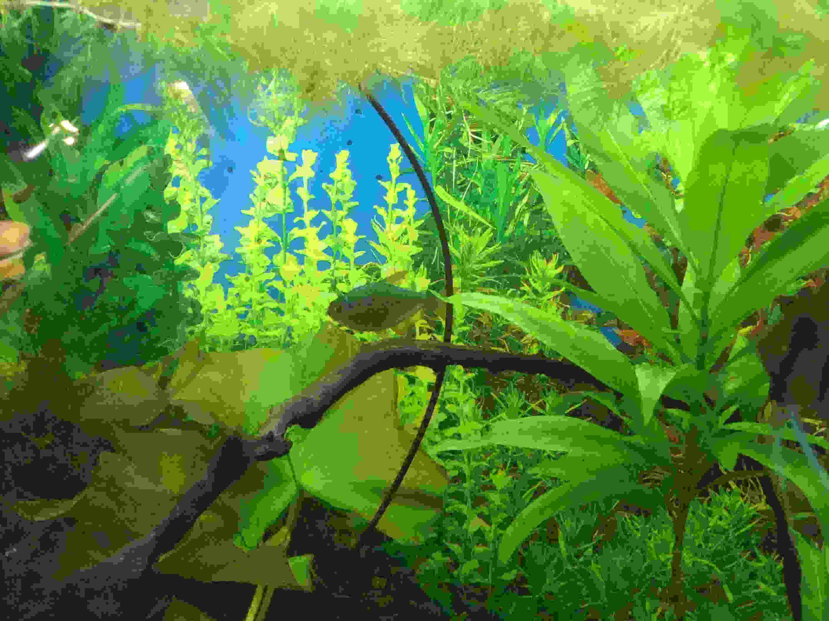 Bright green Aquarium Wallpaper